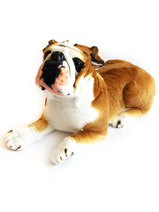 Собака 7GW53BU